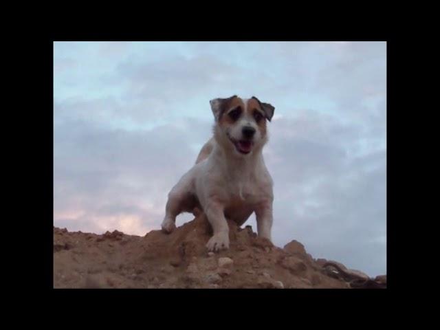 Jesse's Webisode: I need a Hero! - Mini Movie Animal Acting