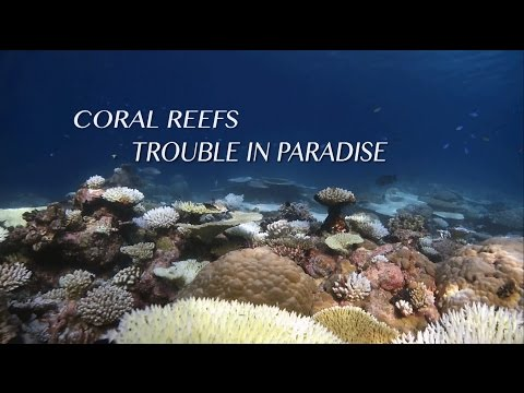 Coral Reefs: Trouble in Paradise