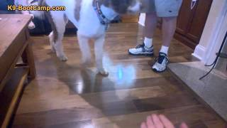 Behavior Modification Of Fearful Dog