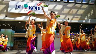 よさこい連「わ」@第18回神戸よさこい祭り・デュオこうべ