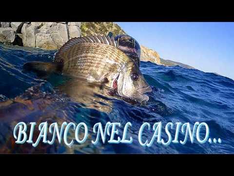 BIANCO NEL CASINO....SPEARFISHING PESCA IN APNEA