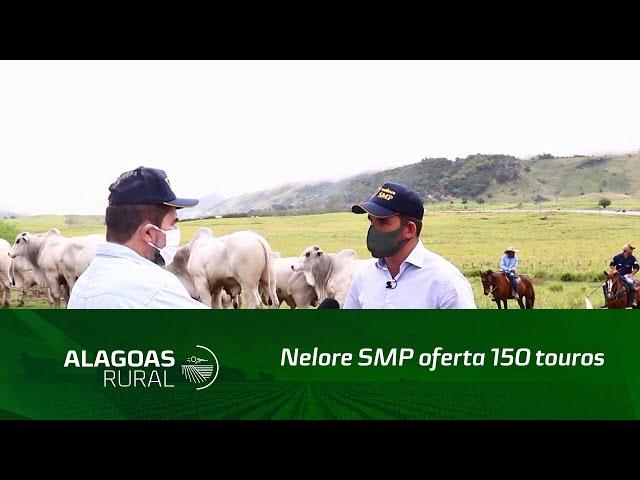 Nelore SMP oferta 150 touros no Leilão Mega Touros