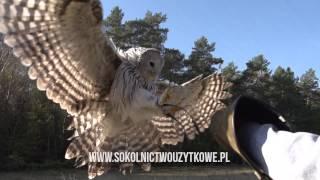 sokolnictwo użytkowe pl slow motion Sony NEX - FS700