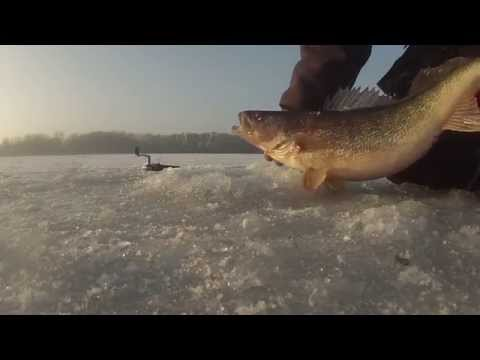 Mississippi River Ice Magnum Perch & Walleye