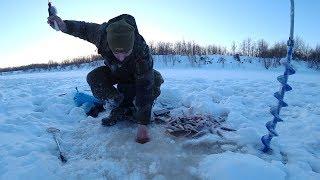 ОДНА ЛУНКА 100 ОКУНЕЙ Рыбалка на севере Часть 2