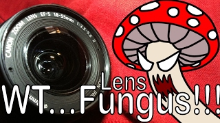 LENS FUNGUS - Does it matter? / Hongos en lente - Importa?