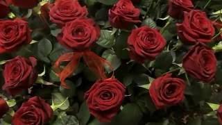 """Футаж """"Красные розы""""& Скачать бесплатно, & Для создания видео."""
