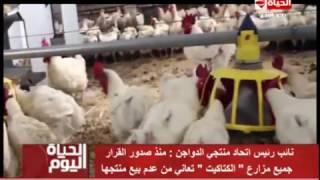 فيديو.. «منتجي الدواجن»: قرار الإعفاء من الجمارك دعما للمستورد على حساب المحلي