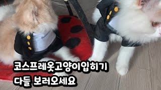 코스프레옷고양이입히기/남자학생여자학생옷입히기/ 고양이옷…