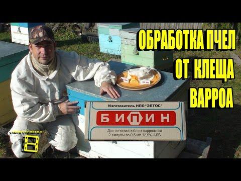 Обработка бипином пчелиных семей