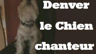 Denver Le Petit Chien Chanteur