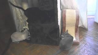 SynergyLabs ЭСКТРИМ КЭТНИП (Xtreme Catnip) суперконцетрированный спрей кошачьей мяты для кошек