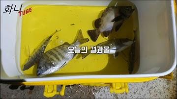 화니튜브#26 통영 도보방파제 차대고 10초 밤낚시에 #감성돔 올라오네요^^