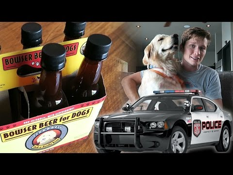 Koda Stops a Robber, Trying Dog Beer, and a HUGE ANNOUNCEMENT! (SCS #71)