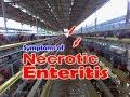 Necrotic Enteritis in Chickens, NE,  Clostridium perfringens, Poultry Diseases Symptoms