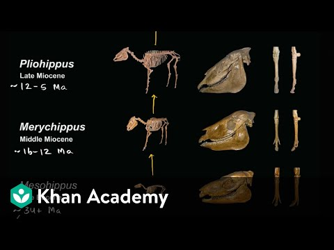 Evidence for evolution  | Biology | Khan Academy