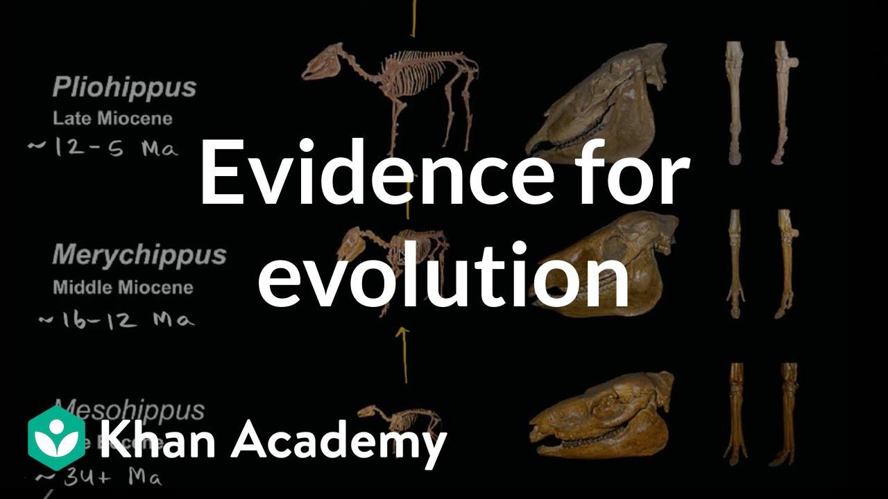 Evidence For Evolution Video Evolution Khan Academy