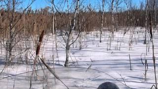 Снегоход Stels s800 РосомХа(просто выезд по охотничьим делам передвижение по полю , лесу , насту , болоту , колеям., 2015-03-01T22:19:38.000Z)