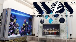 SS.S 季海珊瑚 ㅆ 概念影片 SEASON SEA CORAL REEF TANK
