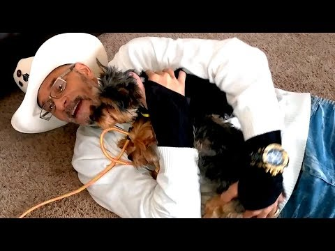 ATTACK of the Yorkshire Terriers DOG WHISPERER BIG CHUCK MCBRIDE