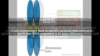 Centromere Top # 12 Facts