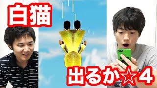 【白猫】キャラガチャ5回ででるか☆4つ! thumbnail