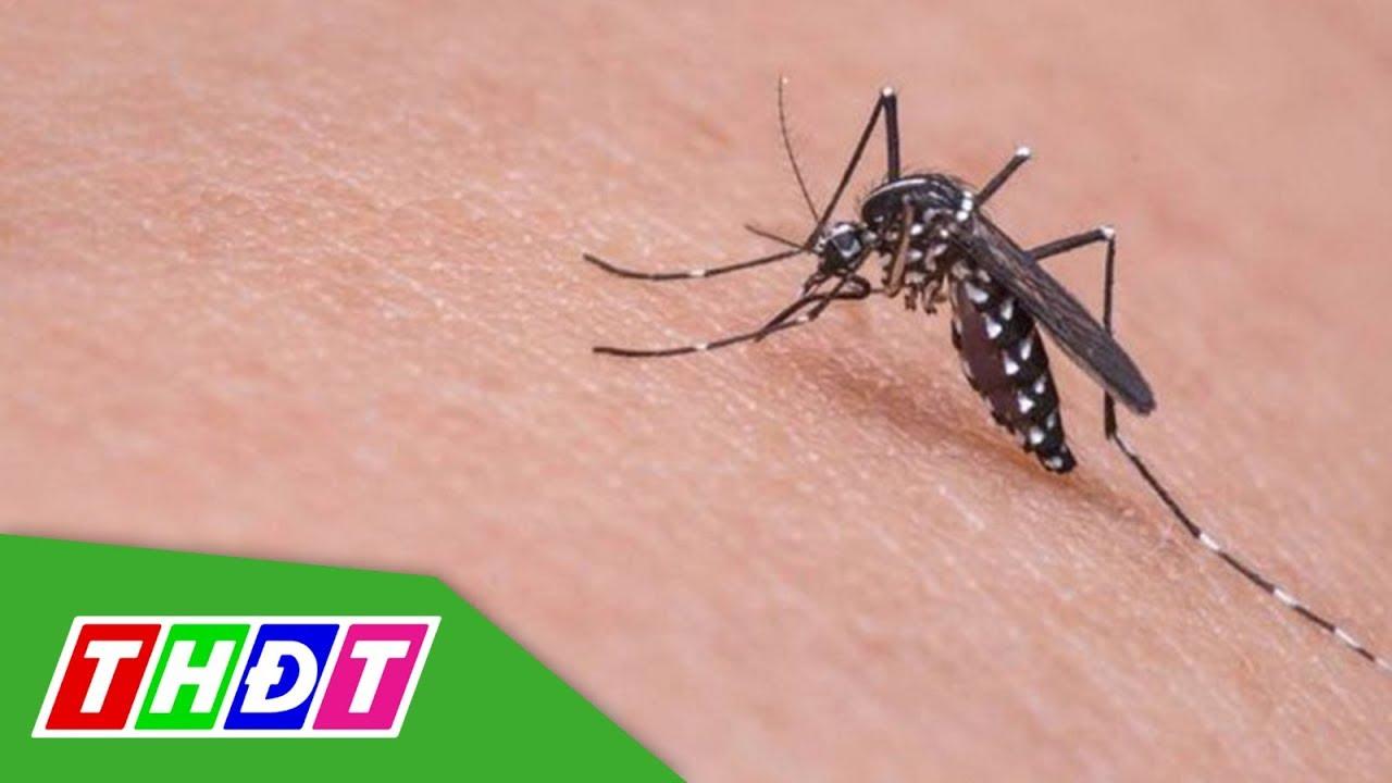 Đồng Tháp: Bệnh sốt xuất huyết tăng gấp đôi so với cùng kỳ   THDT
