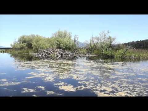 Discover the Upper Klamath National Wildlife Refuge