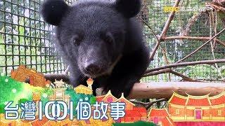 南安小熊要回家 九個月野訓過程全紀錄 part1 台灣1001個故事