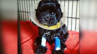 This Abandoned Puppy Was About To Be Euthanized, But The Vet Saw A Sign Of Life At The Last Moment