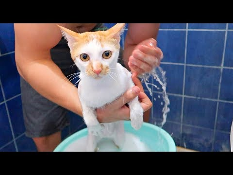✰Cat SHOWERING Like a HUMAN! How To Bath a Cat Calmly💦