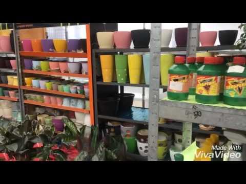 Где купить цветы оптом в Киеве - YouTube