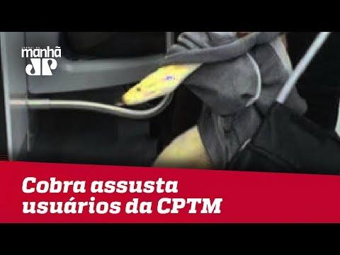 Homens Transportam Cobra Em Trem Da Linha 11 Da CPTM