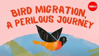 Bird Migration, A Perilous Journey - Alyssa Klavans