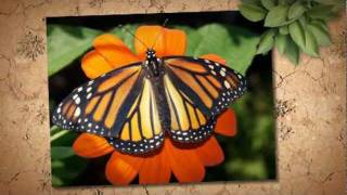 How To Create A Monarch Butterfly Garden...that Gets Results!