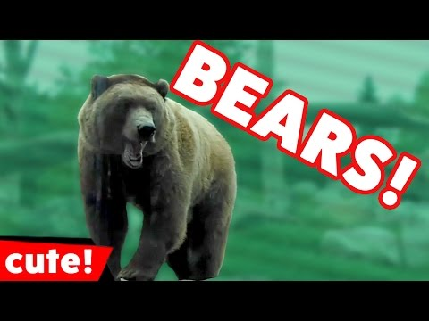 Funniest Bears Are Awesome Video Compilation November 2016 | Kyoot Animals