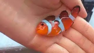 Najbardziej Toksyczne Ryby Na Świecie!
