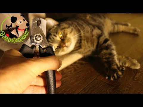 Вопрос: Как научить котенка при игре со мной прятать коготки?