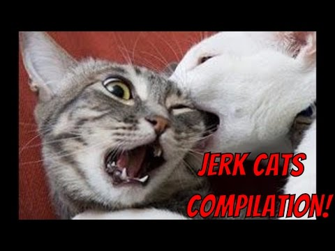 Jerk Cats  Funny Animal Compilation