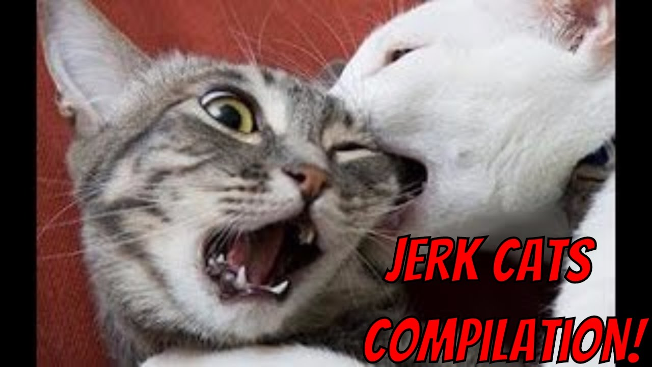 Jerk Cats Funny Animal Compilation Youtube