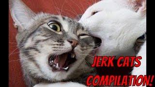 Cand pisicile sunt obraznice :))
