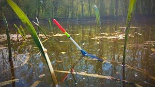 КИЛОГРАМОВЫЙ КАРАСЬ В ЛЕСНОЙ РЕЧУШКЕ Ловля карася на поплавочную удочку