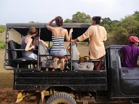 Sri Lanka - Yala National Park - Elephant - Leopard - Wild Boar - Сrocodile - Jeep Safari