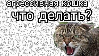 Что делать если кошка стала агрессивной?