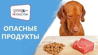 Какими продуктами нельзя кормить собак и кошек? Рекомендации ветеринарного врача