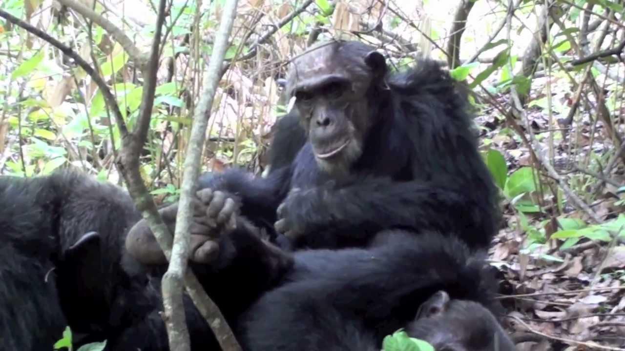 Mahale Mountains National Park, Tanzania | Audley Travel