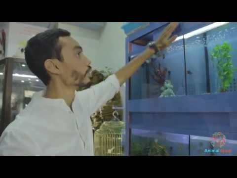 Animalerie Au Maroc : Animal Shop Rabat Kénitra Casablanca Marrakech