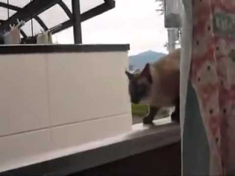 Fat Cat Jumps Off Roof Trust Me Its Worth It Youtube