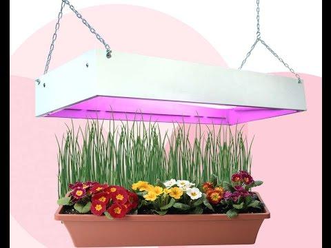 ПОДСВЕТКА комнатных растений в ЗИМНЕЕ ВРЕМЯ. Досвечивание