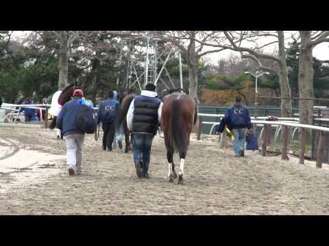 Last Part: Nicanor Exiting the track, Aqueduct, Nov. 26, 2010.